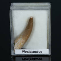 plesiosaurus fog