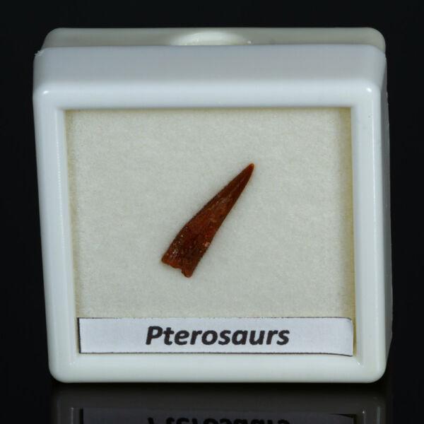 pterosaurs fog